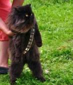 wookie chat