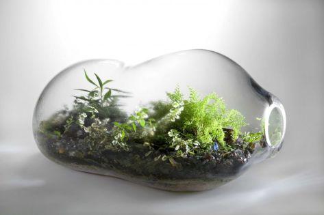 00-paula hayes living terrarium