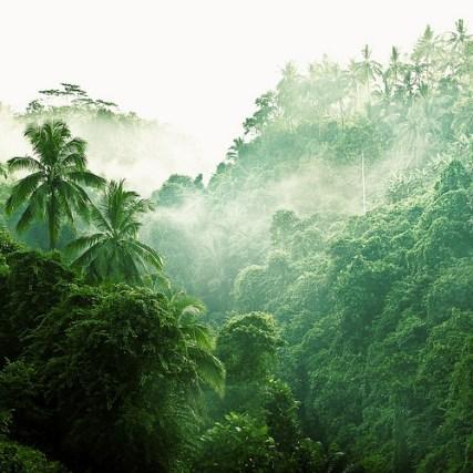 foret jungle