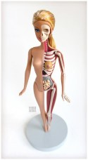 barbie dissection 2