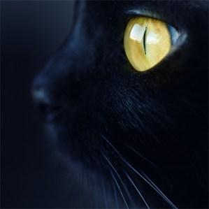 chat noir gros plan