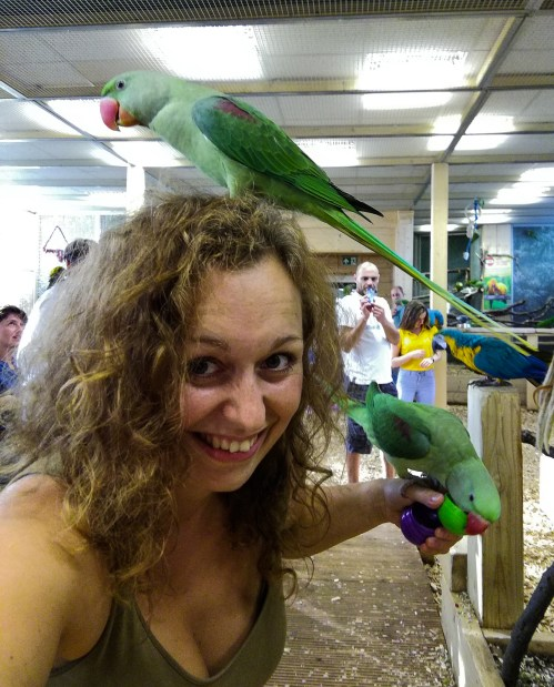 papugi carmen