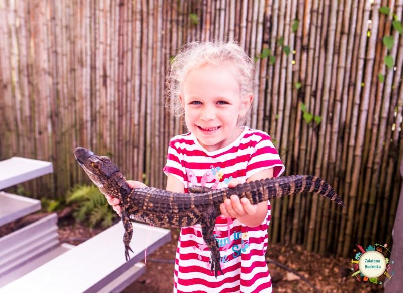 mały aligator