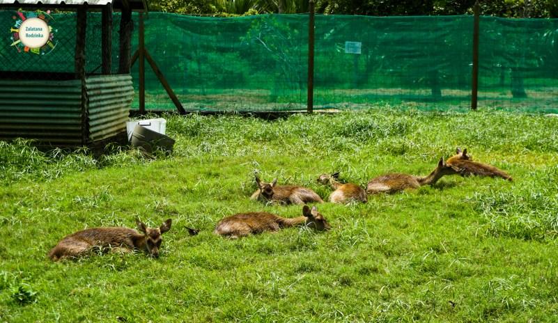 zwierzęta mauritius