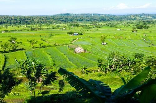 indonezja tarasy ryżowe