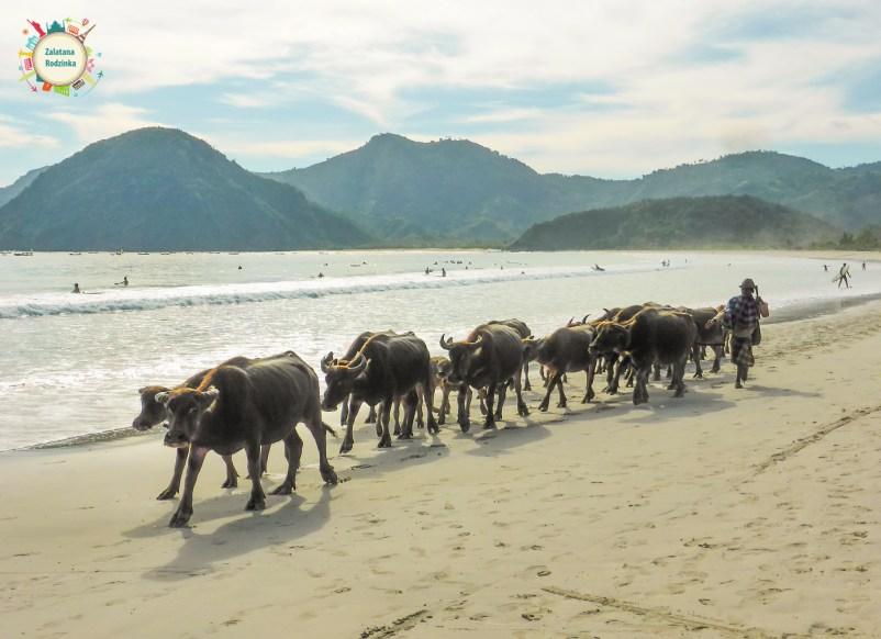 lombok miejscowi