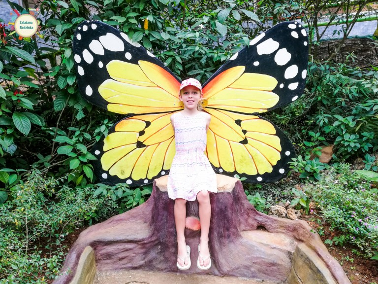 ogród motyli filipiny