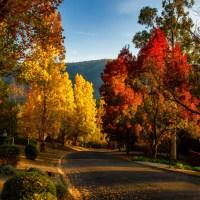 Culorile toamnei - cele mai frumoase ipostaze