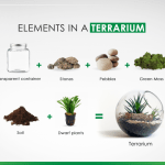 How To Build A Terrarium On Your Own Zameen Blog