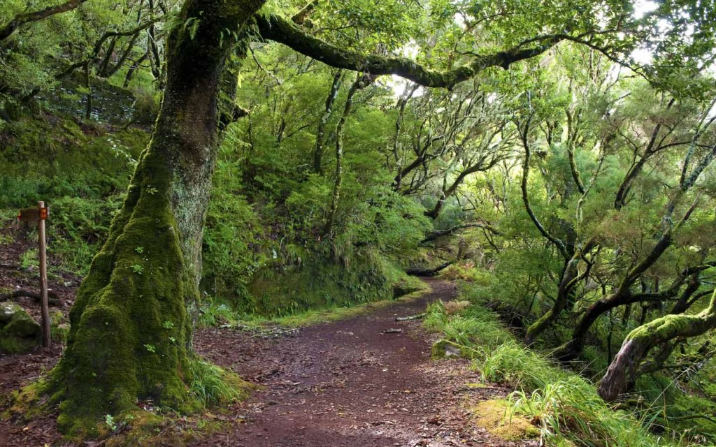 Himalayan Moist Temperate Forests are home to oak trees