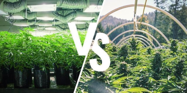 Whats%20The%20Difference%20Between%20An%20Indoor%20And%20Outdoor%20Grow%20Setup