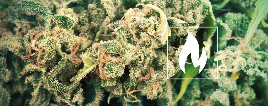 decarboxylate your cannabis