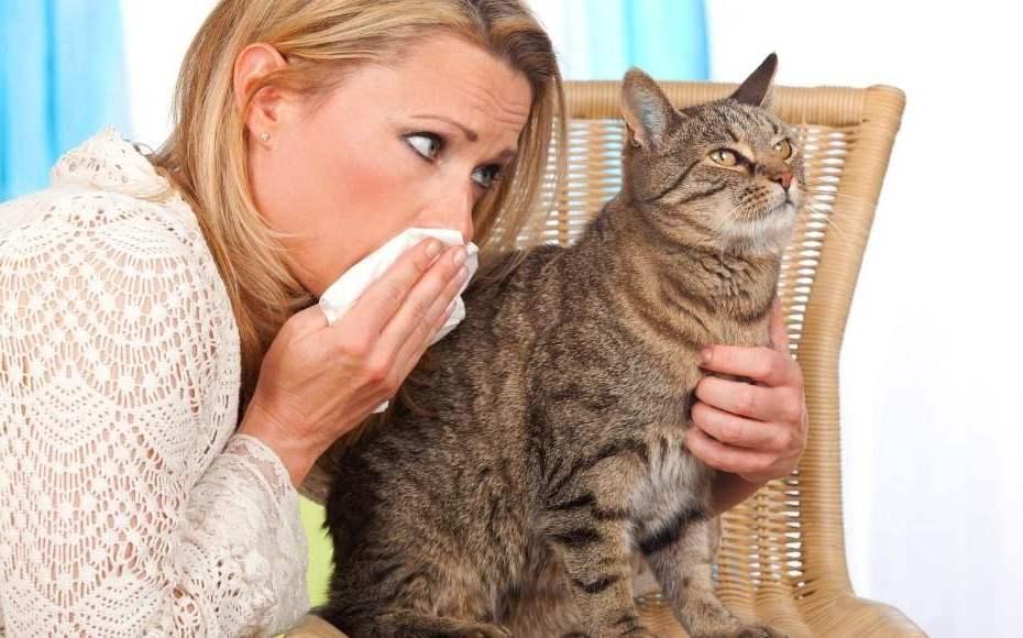 allergia a cani e gatti