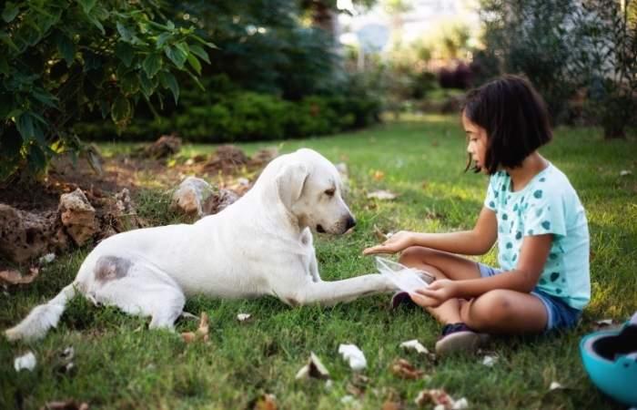 cani e bambini insieme
