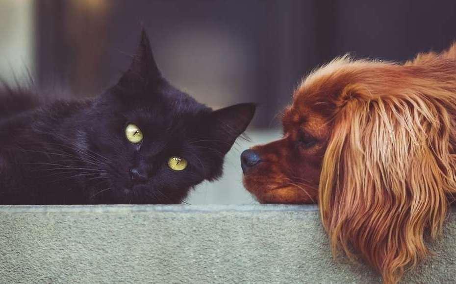 animali domestici da tenere in casa