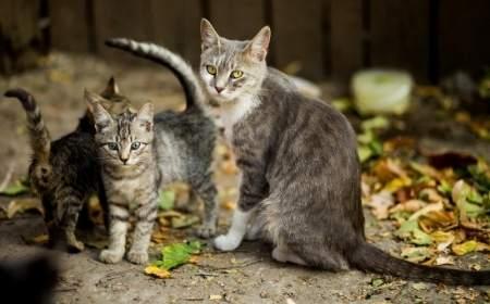 prendere gatto al gattile