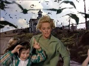 Gli Uccelli di Hitchcock