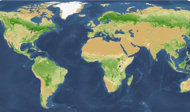 Gli alberi nel mondo