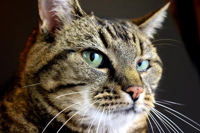 I gatti non soffrono se lasciati soli a casa per lungo tempo