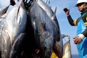 Le fabbriche del tonno in scatola in Indonesia