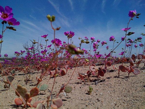 desiertofloridocarlosmartinez