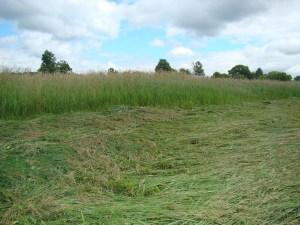 half cut hay field