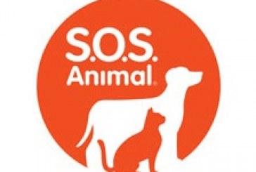 """""""SOS Animal"""" já tem data e hora de estreia definidas e apresentadores revelados"""