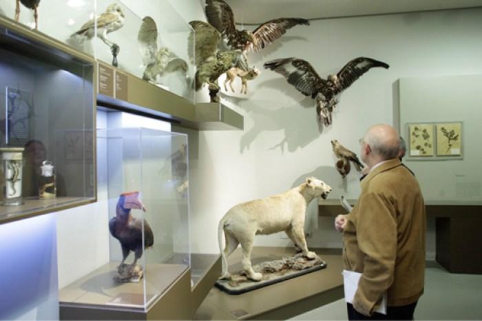 Museo de Ciencias Naturales de Zaragoza -Animales disecados de la exposición de la Universidad de Zaragoza