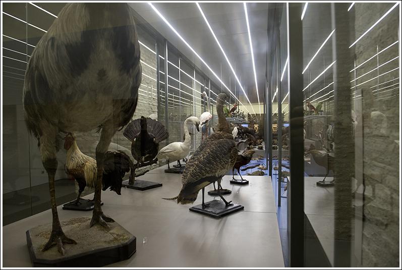 Museo de Ciencias Naturales de Zaragoza - Aves de la colección de Longino Navas expuestas en el museo de la Universidad de Zaragoza