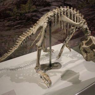 Museo de Ciencias Naturales de Zaragoza - Esqueleto de dinosario expuesto en el Edificio Paraninfo de la Universidad de Zaragoza