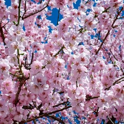 La primavera ya ha llegado a Zaragoza