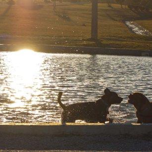 Los mejores parques para pasear con tu perro en Zaragoza