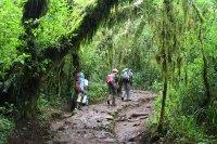 Mount Kilimanjaro Marangu3 route Tanzania Zara Tours 3