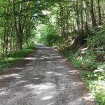 Waldwege ohne Ende...