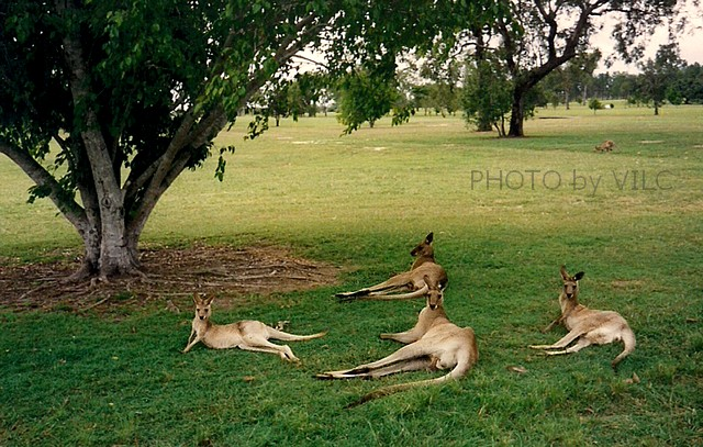 Australija01mm