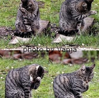 Sosedova mačka mm