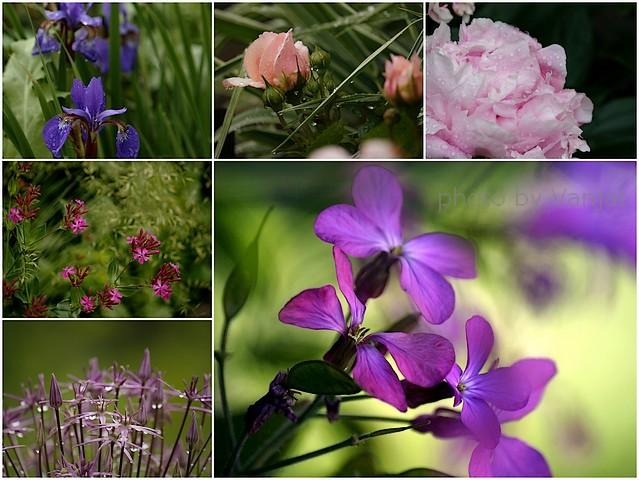 Lepljenka Violet cvetje 2 mm