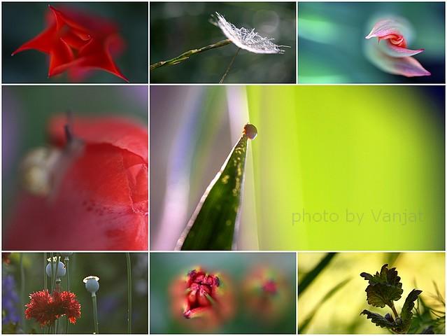 Lepljenka zeleno rdečamm - Kopija