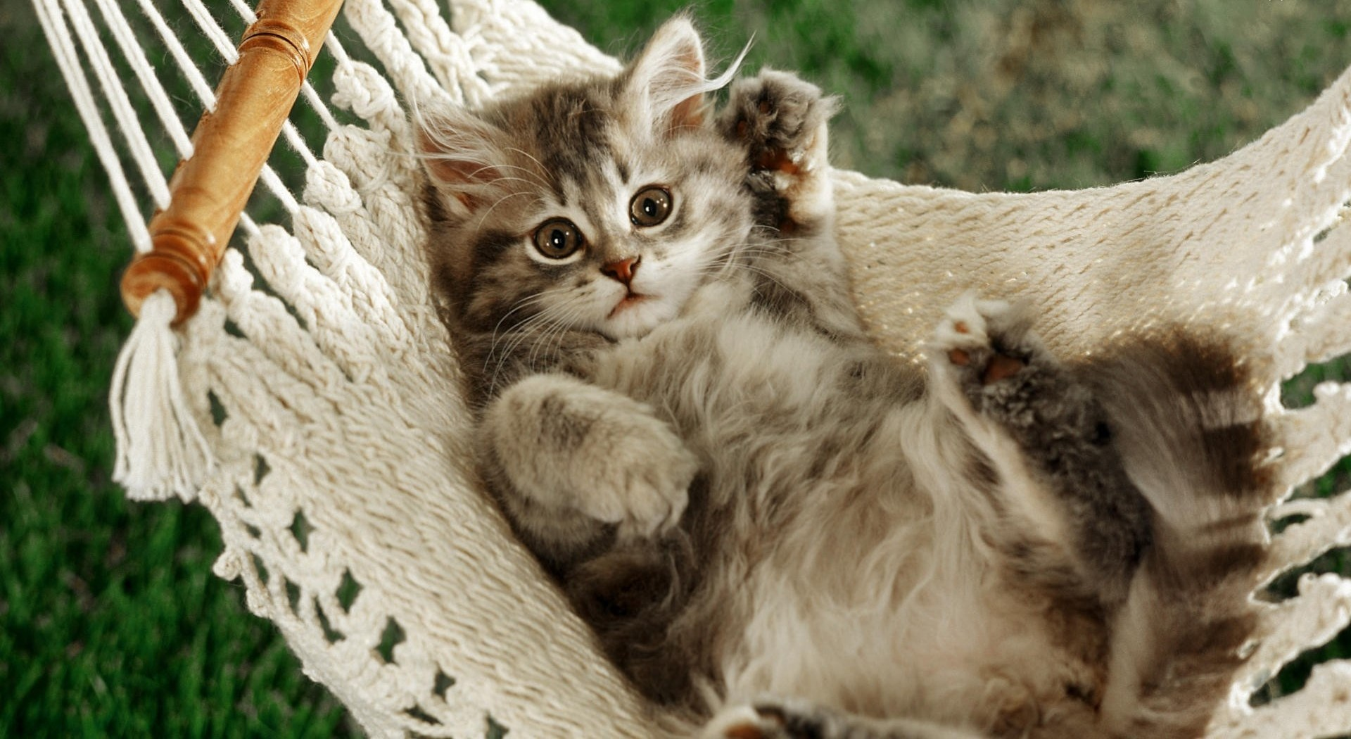 Funny Cat In A Hammock Wallpapers And Images