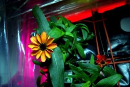 flower_space_01