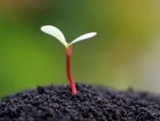 new bud seed