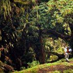 Mt. Meru Forest