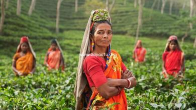 Photo of Place To See – Tea Garden in Assam