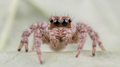 Photo of Elle tombe nez à nez avec une araignée dans son salon. Elle appelle les pompiers