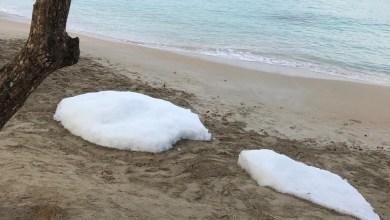 Photo of (VIDÉOS) Des blocs de glace découverts ce samedi matin sur la plage de l'Anse-Figuier à Rivière-Pilote