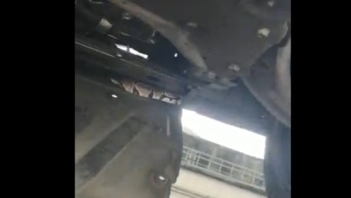 Photo of Un python retrouvé par des mécaniciens dans une voiture au Lamentin