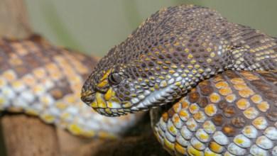 Photo of Il mord un serpent qui l'avait mordu au visage. Ils meurent tous les deux