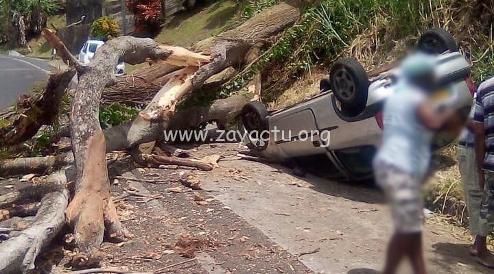 Un arbre chute sur une voiture