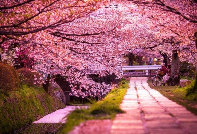 sakura-blossom-in-japan-2015-artnaz-com-15