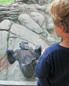 Monkey at Knoxville zoo